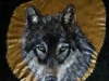 l14_wolf_close_up